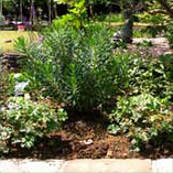 garden design shrubs